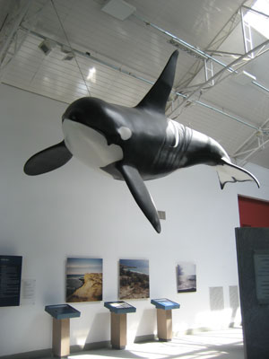 Killer whale model inside Ecocentro in Puerto Madryn