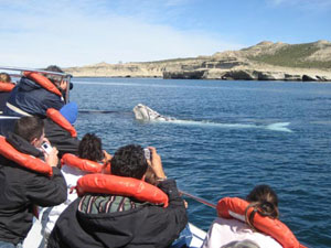 Whale watching in Peninsula Valdes