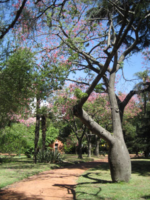 The Botanical Gardens of Buenos Aires