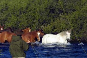 Fishing in Patagonia River horses passing through