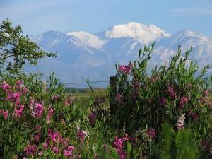 Mendoza Countryside